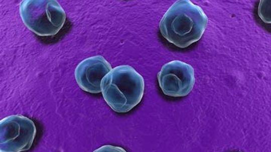 Does chlamydia affect fertility?