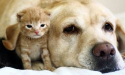 We love our pets like family, but they can leave behind a real mess.
