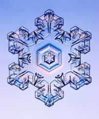 A photograph of a snowflake, taken with a special photomicroscope.