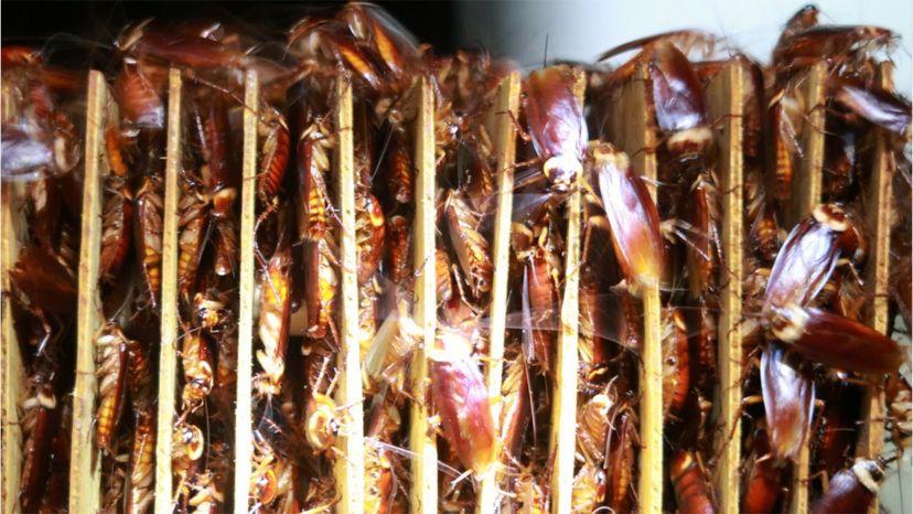 cockroach farms, food waste
