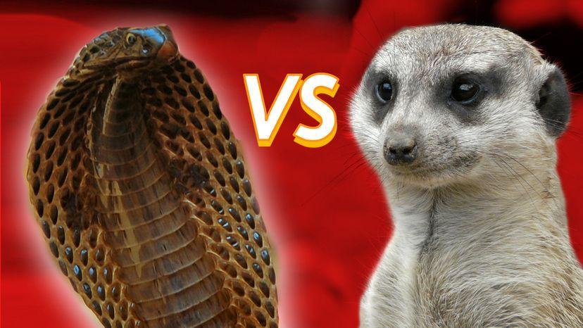Mongoose Vs Python
