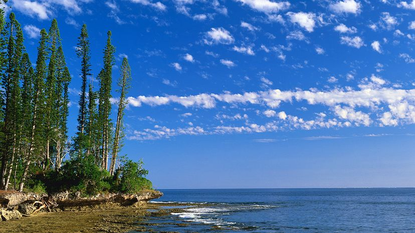 Cook pine trees stand tall on the Kuto Peninsula in New Caledonia. Ross Barnett/Lonely Planet Images/Getty Images