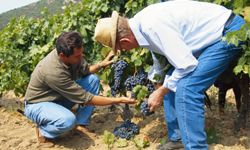 Is working in the vineyard a dream job for you?