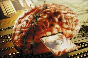 Brains share some qualities with computers, but the two aren't totally analogous. See more brain pictures.