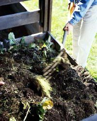A compost pile can serve many uses in the vegetable garden. See more pictures of composting.