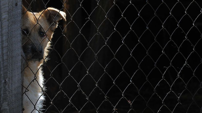 Connecticut becomes the first state to appoint legal advocates for abused animals — similar to court-appointed advocates for children. SERGEI SUPINSKY/AFP/Getty Images