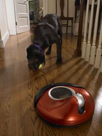 Could it be used to gauge the viciousness of your family's dog?