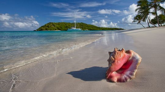 Should You Take a Conch Shell From the Beach?