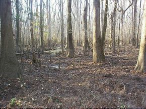 National Parks Image Gallery The bottomland forests of Congaree National Park support a diverse range of animals, including bobcats and box turtles. See more pictures of national parks.