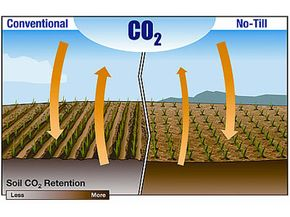 Tilling permits carbon dioxide embedded in the soil to escape.