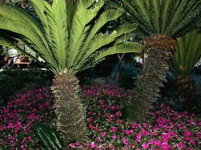 A water-friendly Xeriscape in Florida.