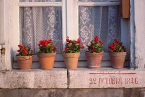 For those of us who spend most of their time inside, container gardening might get us back in touch with nature.
