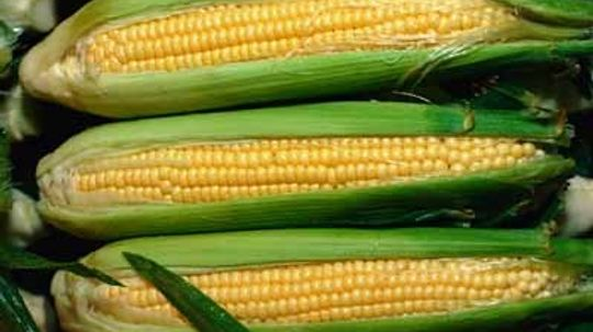 Where do corn oil and corn syrup come from?