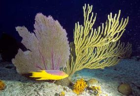 Thousands of individual polyps cluster together to form this single branching coral.