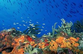 Marine Life Image Gallery Coral reefs, the rain forests of the sea, support a wide variety of marine life. See more pictures of marine life.