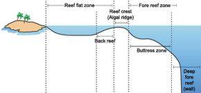 Coral reefs have several distinct zones.