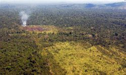 Deforestation of the Amazon for cattle grazing has been a problem behavior of Brazilian beef producer Yaguarete Pora S.A.