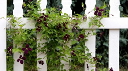 10 Creeping Vines that Provide Privacy