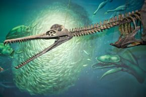 The Dolichorhynchops bonneri plesiosaur hangs with some of his marine brethren at Pittsburgh's Carnegie Museum. It didn't survive, but the sea turtle did.