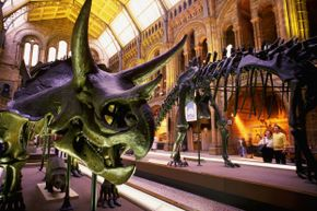 You've heard all about the dinosaurs. Why not meet some animals that scurried, hopped and cruised through the Cretaceous?