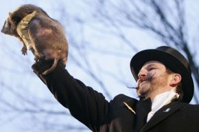 Maybe members of the Vintana sertichi species would be happy to miss this tradition for modern U.S. groundhogs.