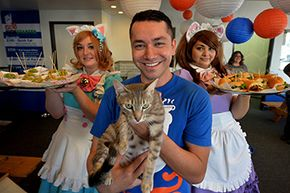 Carlos Wong poses with his staff and a cat during an event to promote his Kickstarter campaign for Catfe in Los Angeles. The cafe would allow patrons to interact with cats up for adoption. Wong's goal was $350,000 but he only raised $9,000.