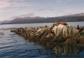 "Sea lions and cormorants lounge on a ""private"" island in Chile's Patagonia region."
