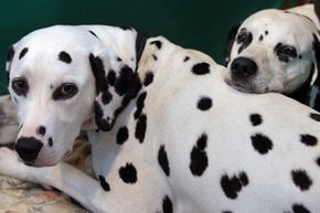 Can you resist those spots?