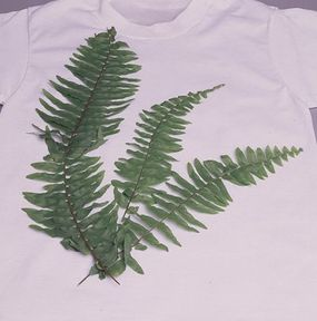 Arrange the fern frongs on the t-shirt.