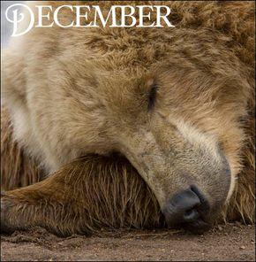 'Tis the season for hibernation!