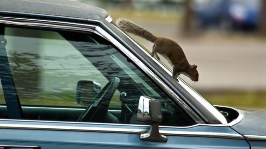 How Do I Get Rid of a Dead Animal Smell in My Car?