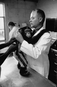 Chimps during training at Holloman Air Force Base for spaceflight