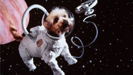 Why Are There Dozens of Dead Animals Floating in Space?