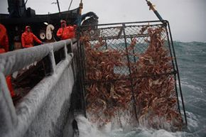 A nice, full pot is pulled from the Bering Sea.