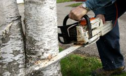 Lots in many neighborhoods have deed restrictions designed to prevent trees from being removed.