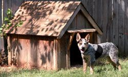 Deeds restrictions often forbid certain breeds of dogs from a property.