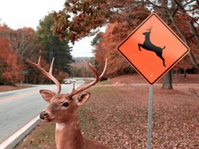 Will scientists discover a non-lethal way to keep this deer from leaping out in front of your car?