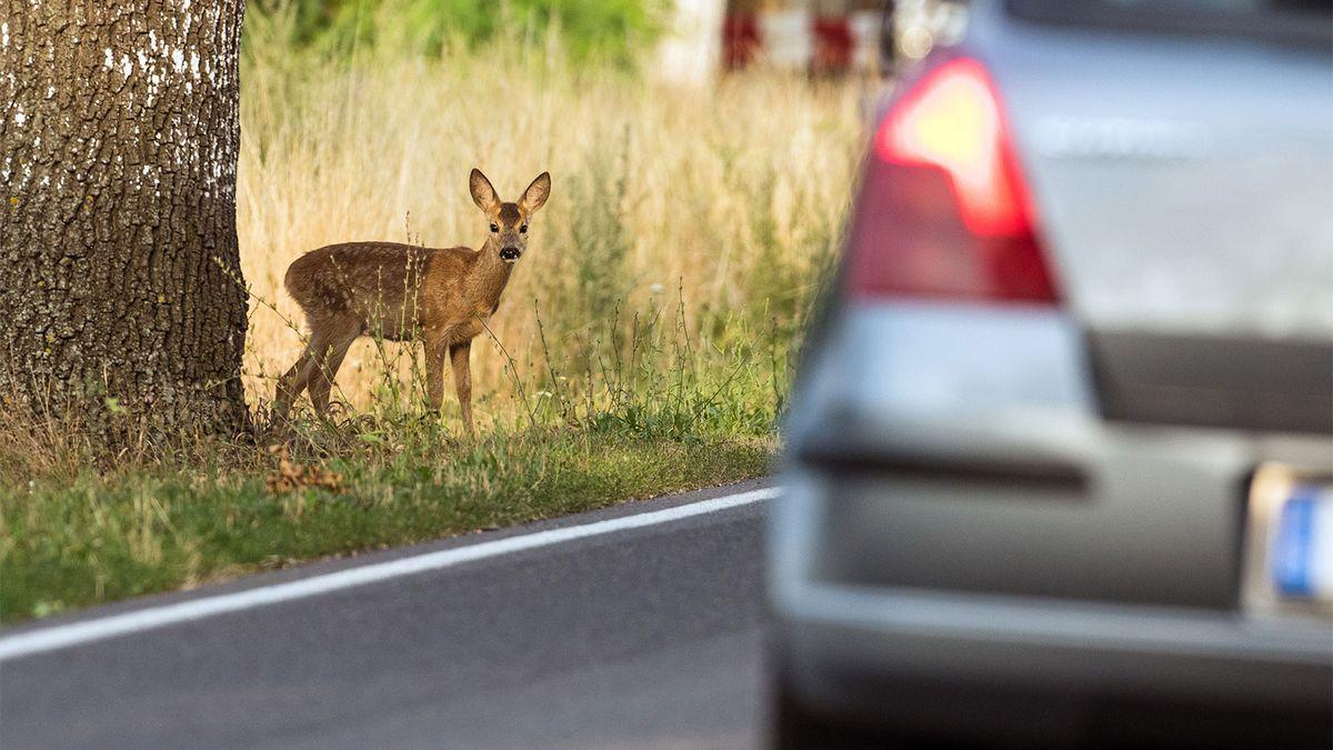 एक हिरण को मारने की आपकी संभावना पतन में वृद्धि