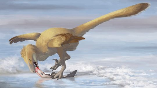 How Deinonychus Upended the Way We Look at Dinosaurs