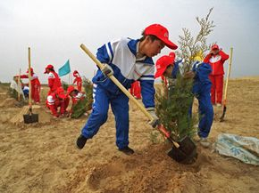 Chinese students plant trees north of Beijing as part of a project to prevent desertification.