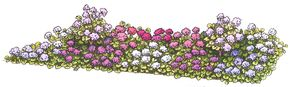 This massed layout uses all varieties of geraniums.