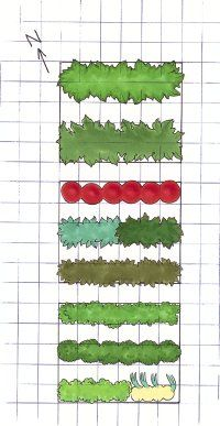 Graph paper can help you plot out your garden. See  vegetable gardens.