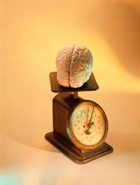 Scientists are studying whether a bigger brain can tip the scales of intelligence.