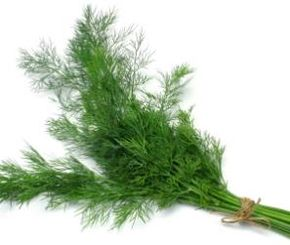©iStockphoto/Sandra Caldwell Dill is a delicious and fresh herb.