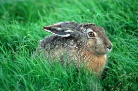 Or were they warm and swift, like a hare?