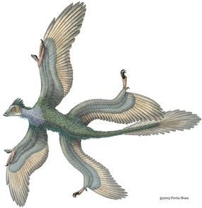 Did Microraptor gui have four wings, or did it just have feathery legs?