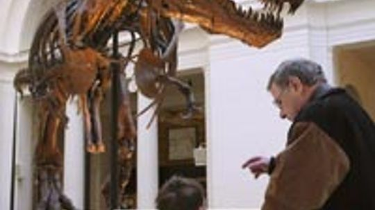 How do scientists know if dinosaur fossils are male or female?