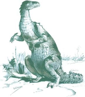 Early drawing (1895) of an Iguanodon