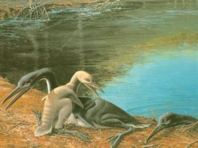 Hesperornis, a Late Cretaceous bird, had wings similar to Archaeopteryx