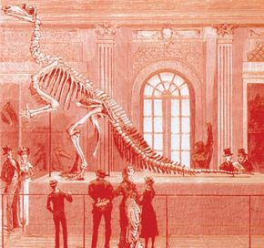 Iguanodon skeleton on display at the Brussels Museum in 1883. Iguanodons were found in Spain by Madrid paleontologist Jose Luis Sanz and his colleagues.